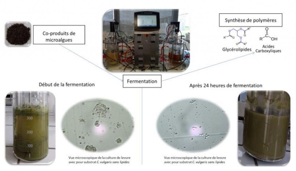 Les résultats des premiers tests de fermentations du projet ALPO